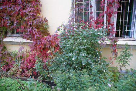 Осень-