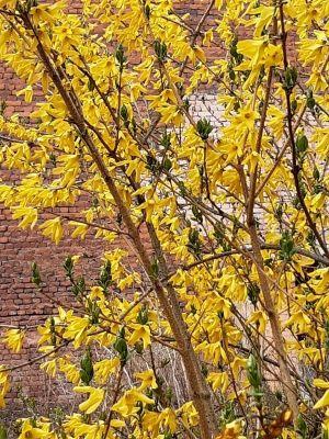 дерево в цвету--min