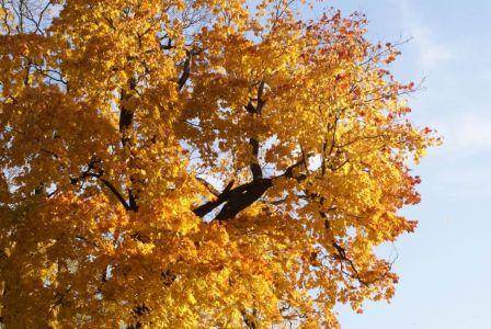 Осень у Смоленки-