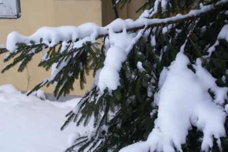 Этюд зимний.