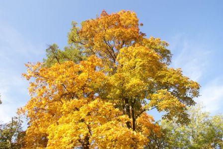 Осень 13 окт.