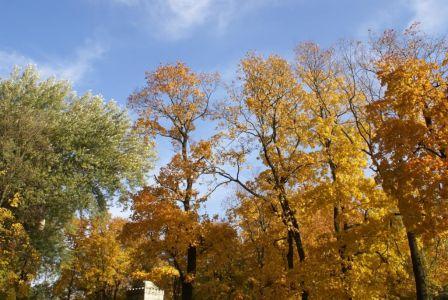 Осень у Смоленки,