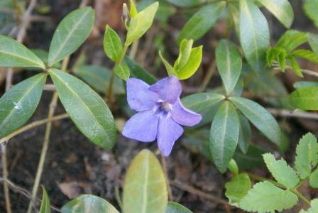 Очень скромный цветок