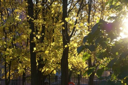 желтый свет