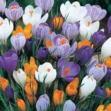 🌸8 марта — праздник цветов, весны и женщин!🌸