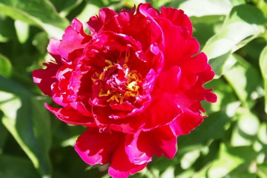 Цветы 14 июня в садике музея кукол