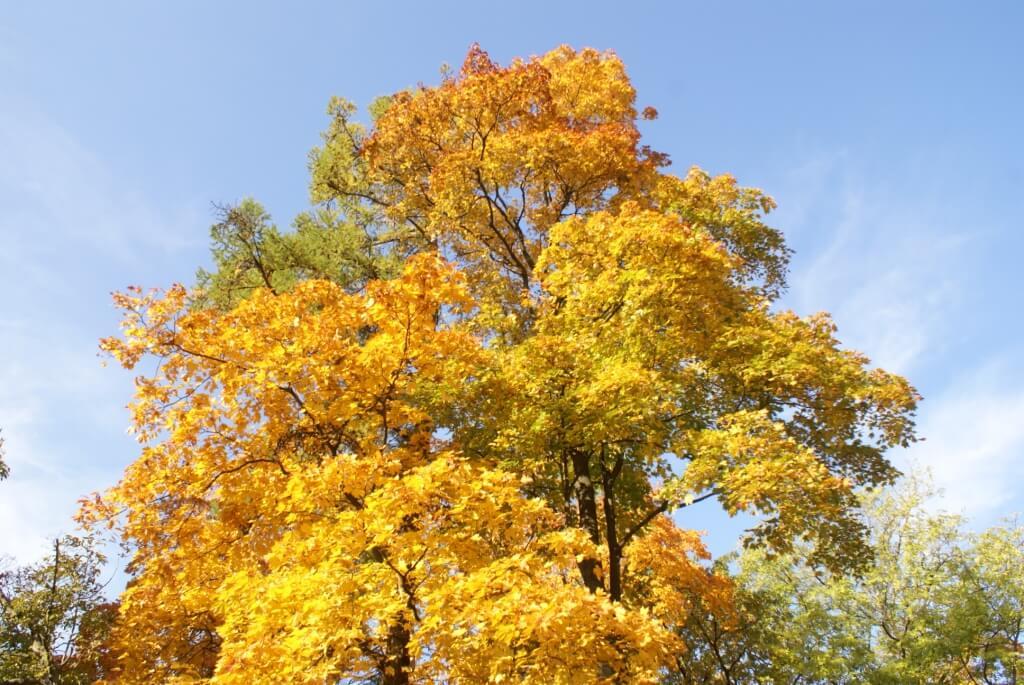 Сентябрь. Через месяц наступит «золотая осень»!