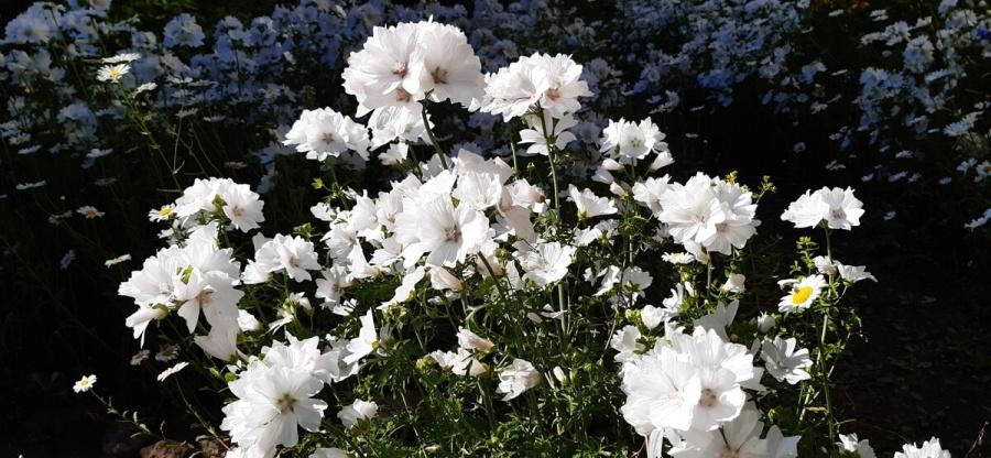 Цветы в садике музея кукол — конец июня